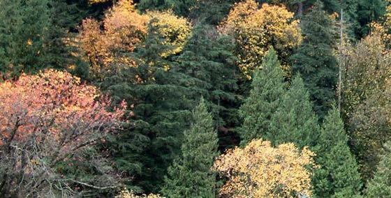 Harrison_trees_fall_1_academy